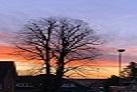 Sonnenaufgang Baum Nenndorf