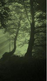 Baumschutz - Umwelt©Gemeinde Rosengarten
